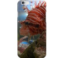 Lion fish iPhone Case/Skin
