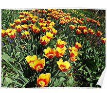Vibrancy on one May morning Poster