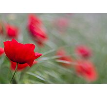 Poppy Love Photographic Print