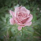 Long Stem Rose by Adrena87