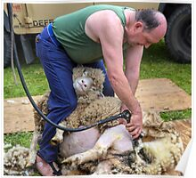 Sheep Shearer at Stockland Fair, Devon.uk Poster
