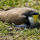 Nesting by miroslava