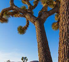 Joshua Tree by BGSPhoto