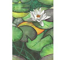 Water lily at Bodnant Gardens - Aquamarkers. Photographic Print