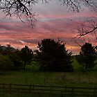 Red Sky - Scotland by Forfarlass