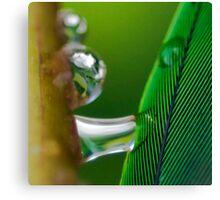 Dreams of Green Canvas Print