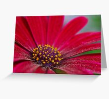 Spring colors. Greeting Card