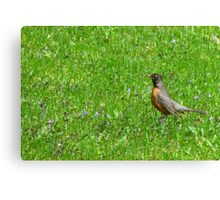 Robin..Covered All Over With Sweet Violets Canvas Print