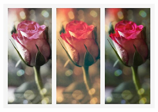 Trio of Roses  by Laura  Cutts