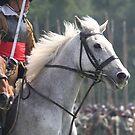 Cavalry Horse by Samantha Higgs
