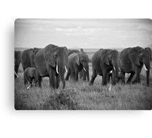 African Elephants (Loxodonta africana) Canvas Print