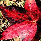 Autumn Leaf by Sally Haldane