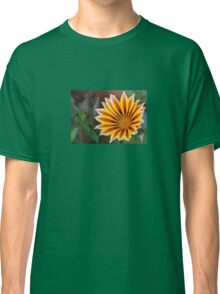 Close Up Tiger Gazania in Red, Gold and Green Classic T-Shirt