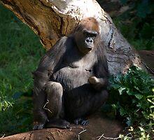 Gorilla - Grumpy by GP1746