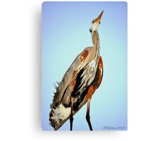 Blue Heron Friend Canvas Print
