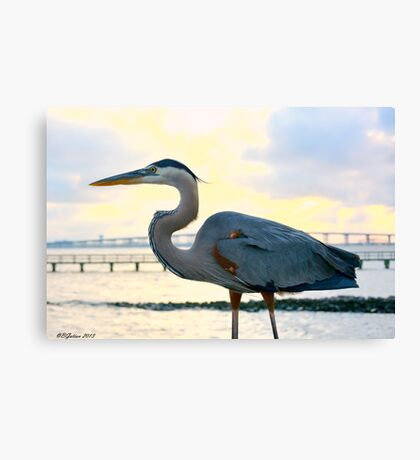 Heron Profile Canvas Print