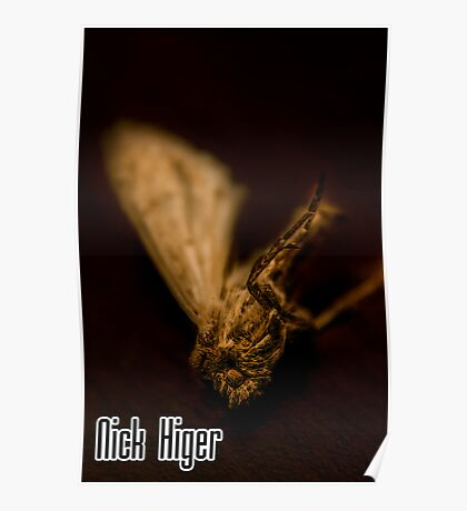 Cartoon-Looking Moth (Photography) Poster