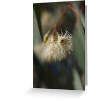 White Eucalyptus Greeting Card