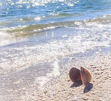 Summertime Seashell by Silken Photography