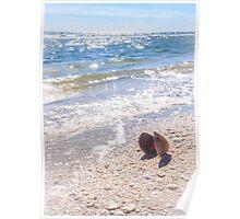 Summertime Seashell Poster