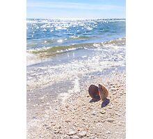 Summertime Seashell Photographic Print