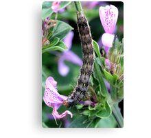 Beautiful Caterpillar Canvas Print