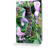 Beautiful Caterpillar Greeting Card