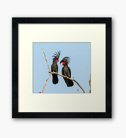 Palm Cockatoo Framed Print