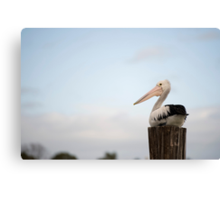 Pelican Perch Canvas Print