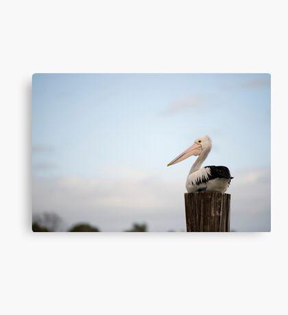 Pelican Perch Canvas Print