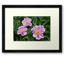 Pink Ladies Framed Print