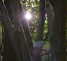 Forest - Starlight (Non Sepia) by Ben Smith