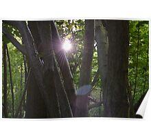 Forest - Starlight (Non Sepia) Poster