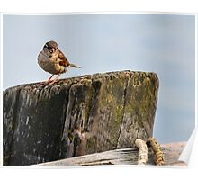 Small Sparrow ,Large Log Poster