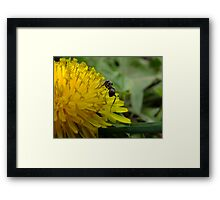 For Parker Framed Print