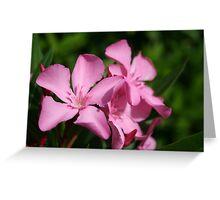 Pink Oleander Blossom Greeting Card