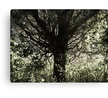 A Tree in Life Canvas Print
