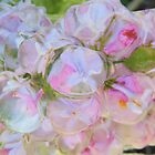 Lilac Ice Marbles by Betty E Duncan © Blue Mountain Blessings Photography