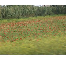Poppies in Tuscany Photographic Print