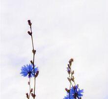 Blue stars by Gisele Bedard
