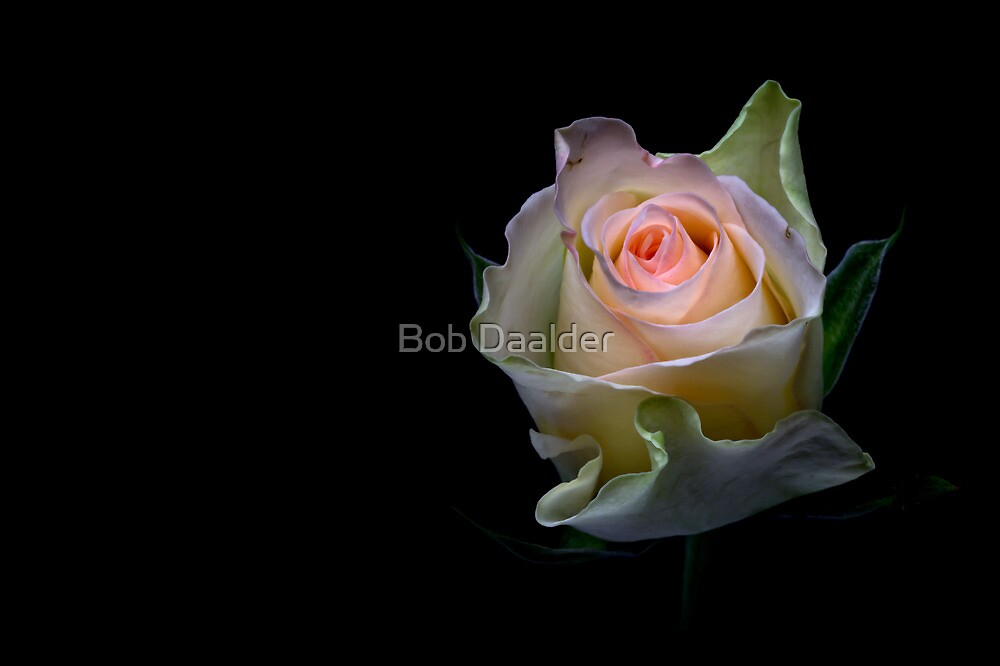 Shining beauty....  by Bob Daalder