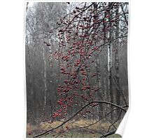 Weeping Crab Apples Poster