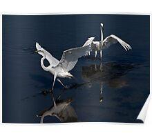 Egret Wings Poster