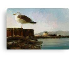 San Francisco Seagulls from peir. Canvas Print