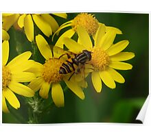 Hover Fly On Yellow Poster