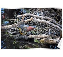 Green Heron HDR Poster