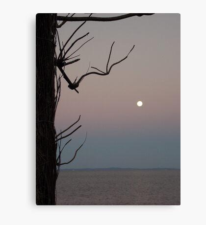 Moreton Bay Moonrise Canvas Print