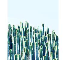 Cactus V2 #redbubble #home #lifestyle #buyart #decor Photographic Print