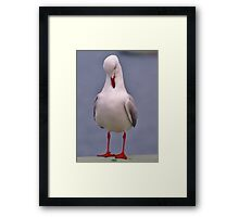 Am I Putting On Weight? Framed Print