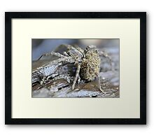 Spider Mom and Babies Framed Print